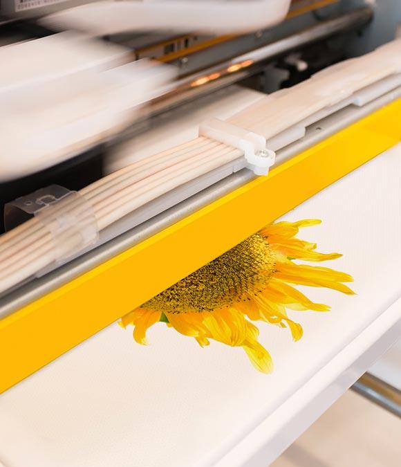 sun flower printing